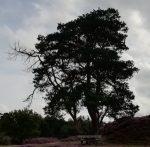 De uitdaging van grote bomen