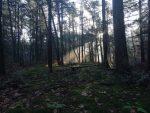 De donkere kant van schaduwbomen