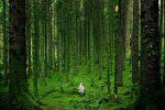 Natuurbeleving verbetert je welzijn