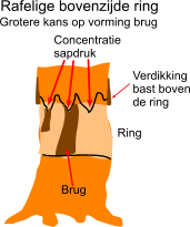 Voorwaarden vorming brug over de ring